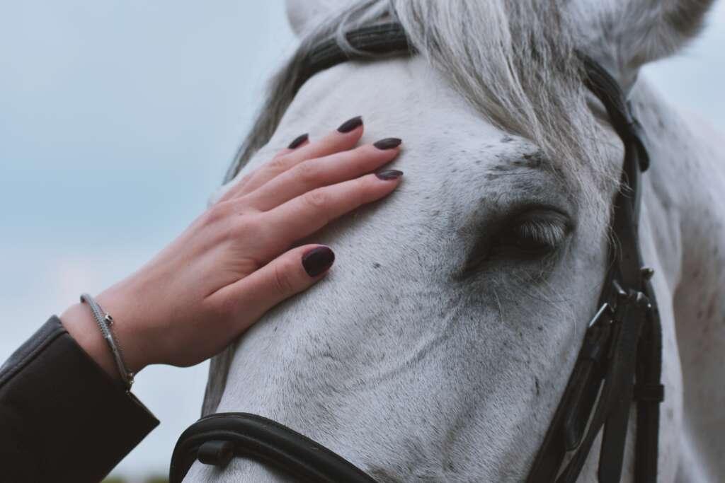 dziewczyna głaszcze konia